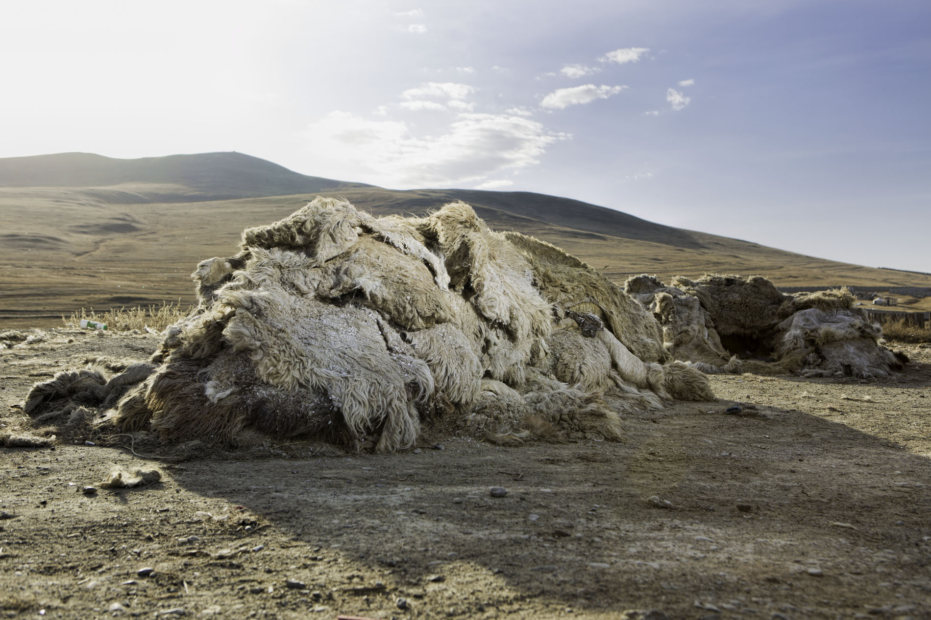 Image - Mongolian Government supports leather and hides production